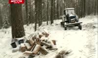 Рядом со «Столбами» продолжают вырубать деревья