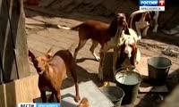 Собаки атаковали жителей улицы Давыдова