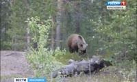 На станции Крючково дачников пугает медведь