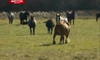 Кони терроризируют деревни вокруг Красноярска