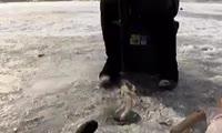 В Хакасии рыбаки выходят на лёд