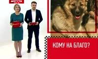 Группы помощи бездомным животным в Красноярске могут закрыться