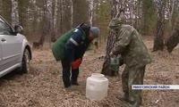 На юге Красноярского края собирают первый берёзовый сок