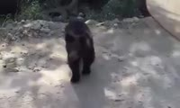 Мишка на дороге