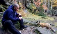 Красноярец приручает лису на Столбах