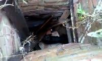 Спасатели вытащили собаку из колодца