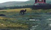 Верблюд в поле