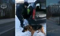 Жители Ачинска спасли собаку, ждавшую хозяина посреди проезжей части