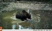 Купание медведя на Столбах