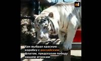 Тигр Хан предсказал исход матча Россия - Египет