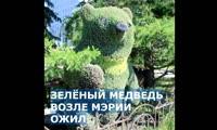 На медведя около мэрии высадили новые цветы