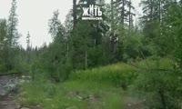 Медведь в лесу возле Норильска