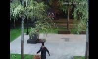 Мужчина украл цветы