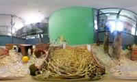 Сурикаты в Роевом ручье
