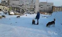 Стая собак на территории бывшего комбайнового завода превышает 20 особей