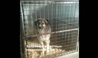 Приют Бездомный пёс