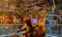 Самое-самое из коллекций комплекса Красноярского краеведческого музея