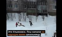 Нападения собак в разных регионах России