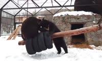 Игры медвежат в парке флоры и фауны Роев ручей