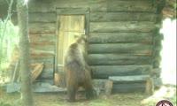 Медведь разоряет избушку