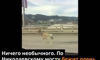 Олень на Николаевском мосту