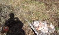 В Красноярском крае сотрудники ГИБДД задержали подозреваемого в незаконной добыче краснокнижного животного