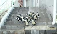 Пингвины переехали в летний вольер