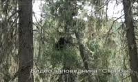 Медведи на Столбах и на Торгашинском хребте
