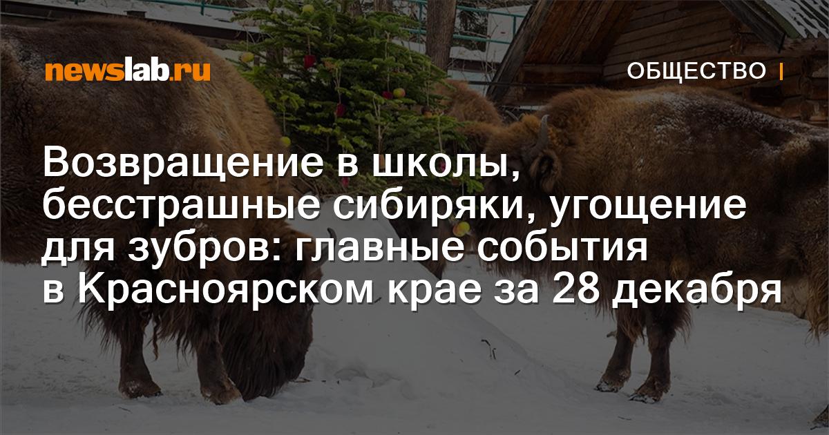 Возвращение в школы, бесстрашные сибиряки, угощение для зубров: главные события вКрасноярском крае за28декабря