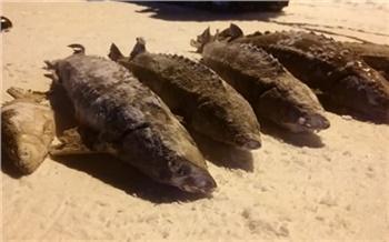 На севере Красноярского края полиция изъяла незаконно выловленную ценную рыбу