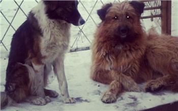 Отловом собак в 2021 году в Красноярске снова займутся зоозащитники Бездомного пса