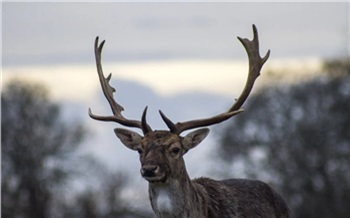 На севере Красноярского края с воздуха пересчитают диких оленей