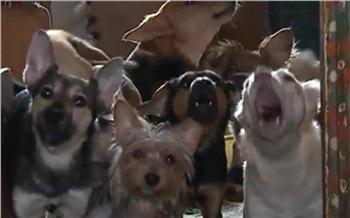 Жительница Канска поселила в своей однокомнатной квартире более 50 собак