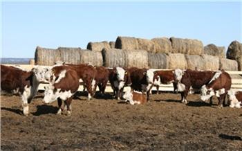 «Без грантовой поддержки работать былобы гораздо сложнее»: как вКрасноярском крае помогают фермерским иподсобным хозяйствам