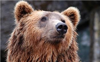 Свалился только после четвертого выстрела: против браконьера из Козульского района возбудили уголовное дело