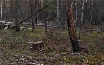Пять лет колонии получил предприниматель из Красноярского края за незаконную рубку леса на сумму более 22 млн рублей