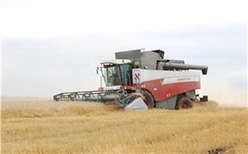 В Красноярском крае во время уборочной собрали 2 млн тонн зерна