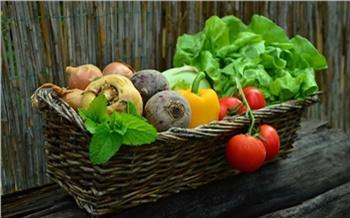 Более 8 тонн овощей собрали для нуждающихся пенсионеров и инвалидов в Красноярском крае