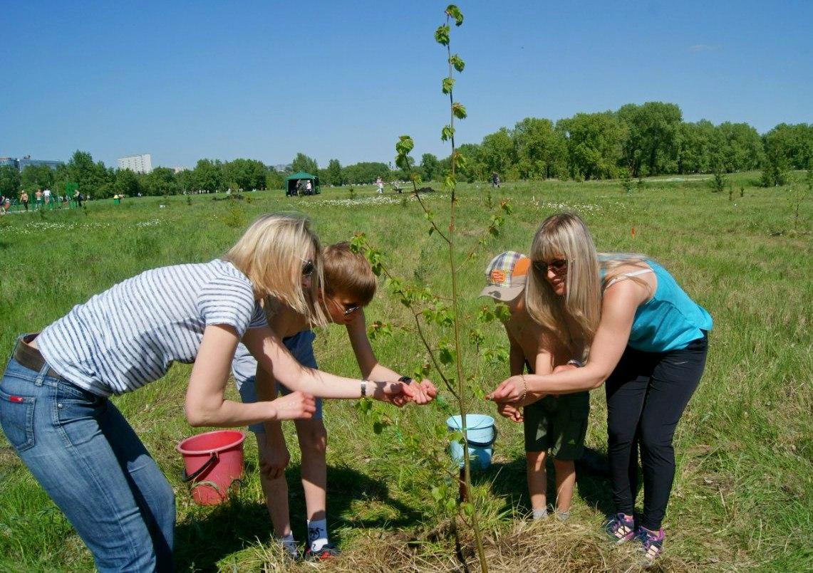 Как сажать деревья в родовом поместье 12