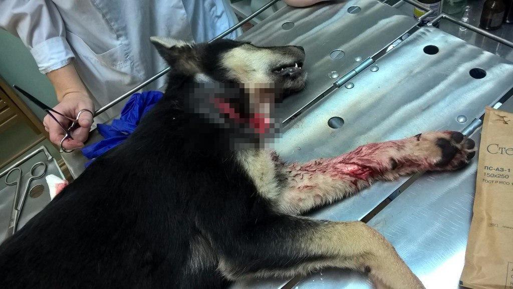 ВДивногорске мужчины зарезали собаку прямо надетской площадке