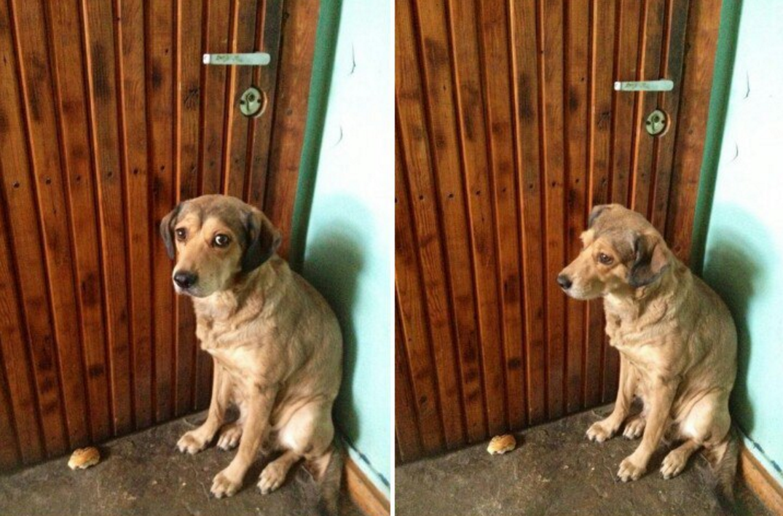 ВКрасноярске собачка три дня пролежала около тела владельца, когда тот скончался