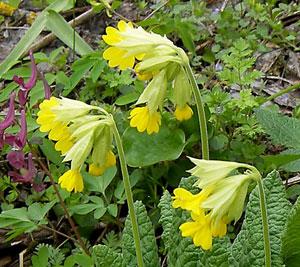 Цветы дикорастущие краснодарского края 92
