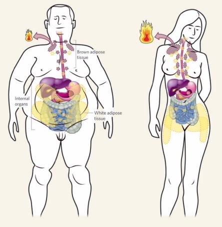 Похудеть Надо Очень