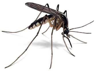 С большим успехом порой ловят карася на комара.  На самый мелкий (є 2...