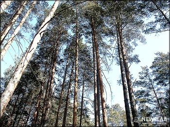 Реальный износ в лесу