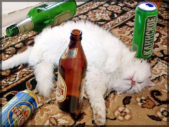 Пьянству - бой! ...и гёрл