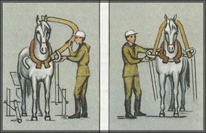Гуж (http://www.skitalets.ru/books/horse_bobilev/ris2829.jpg)