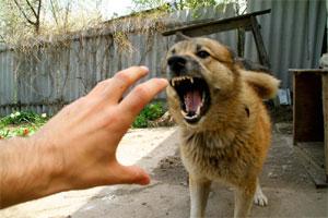 Нападение собак на людей