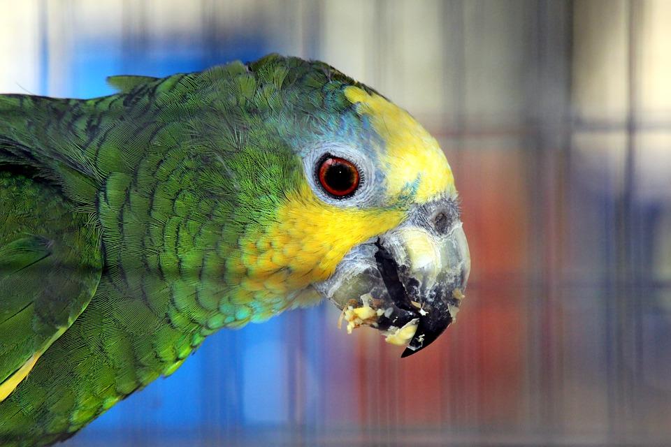 вид фото венесуэльского попугая это